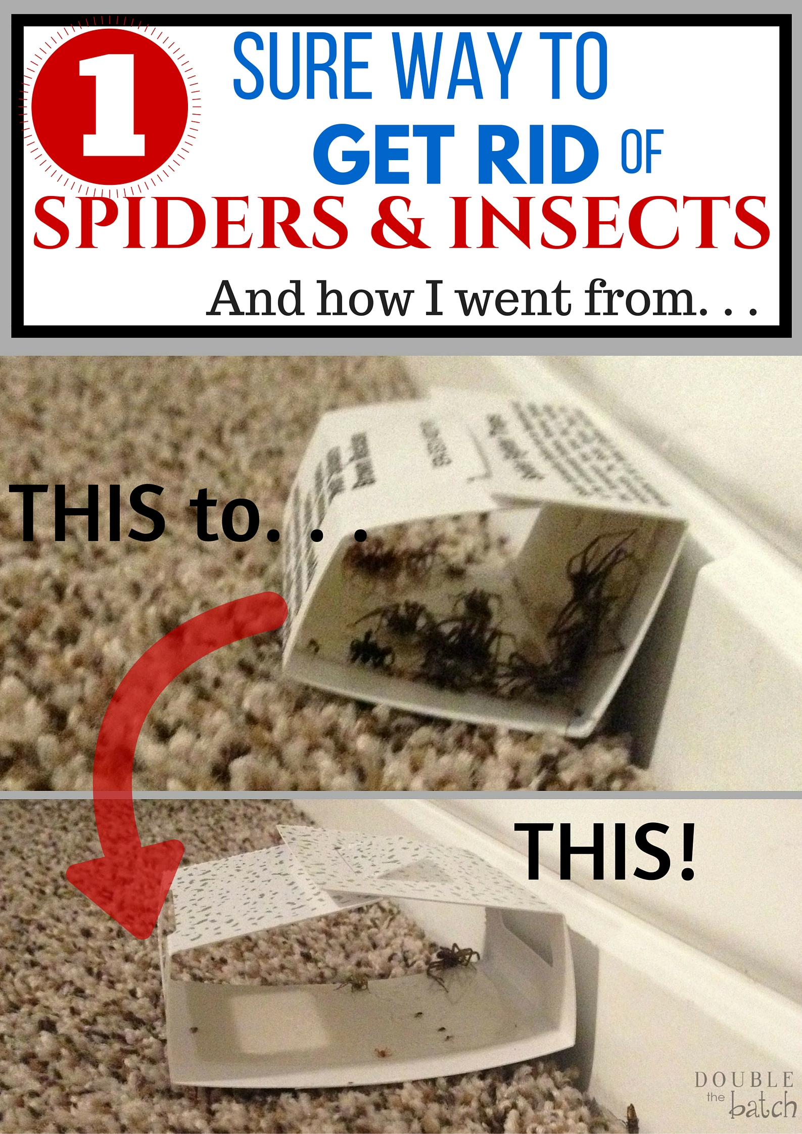 1 Sure Way To Get Rid Of Spiders And Insects In Your Home