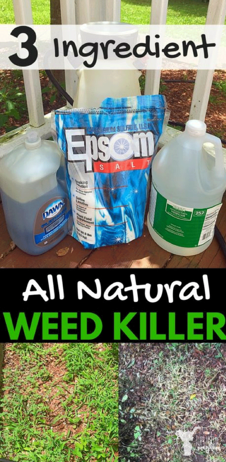 Stop the weeds from growing and kill them from overtaking your yard with this natural weed killer! Only 3 ingredients