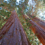 The Ultimate Sequoia National Park Traveling Guide